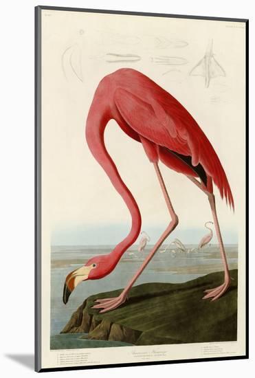 American Flamingo-John James Audubon-Mounted Giclee Print