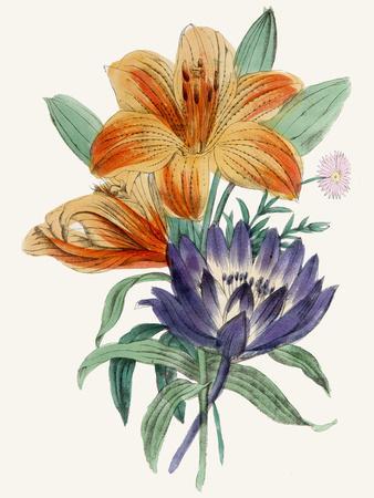 https://imgc.artprintimages.com/img/print/american-flora-lilium_u-l-f93zd10.jpg?p=0