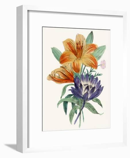 American Flora Lilium-New York Botanical Garden-Framed Art Print