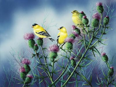 American Goldfinch and Thistle-Wanda Mumm-Giclee Print