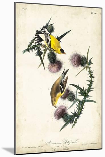 American Goldfinch-John James Audubon-Mounted Art Print