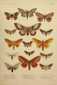 American Lepidoptera, Plate 3