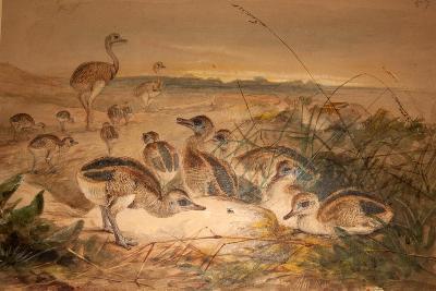 American Rheas (Rhea Americana), C.1851-76-Joseph Wolf-Giclee Print
