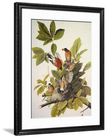 American Robin-John James Audubon-Framed Premium Giclee Print