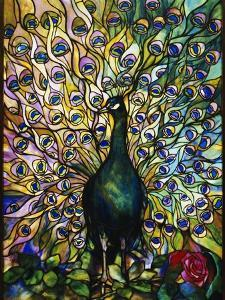 Peacock by American School