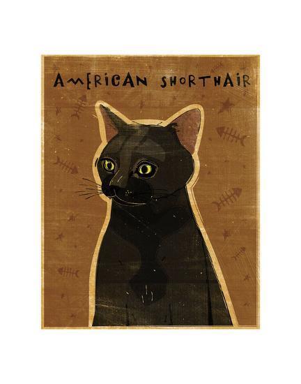 American Shorthair-John W^ Golden-Art Print