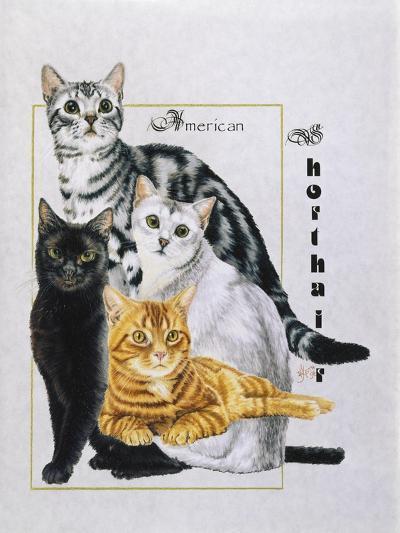American Shorthair-Barbara Keith-Giclee Print