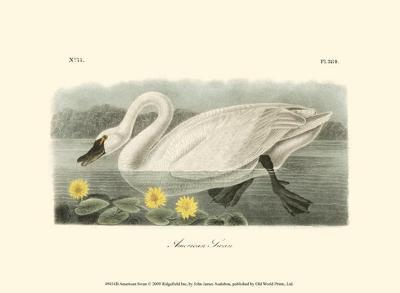 American Swan-John James Audubon-Art Print