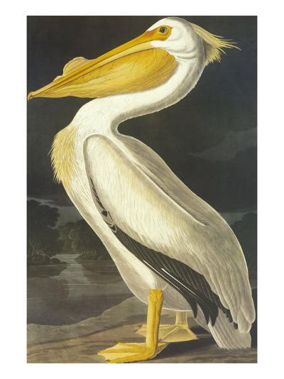 American White Pelican-John James Audubon-Art Print