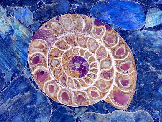 Ammonite in Labradorite-Douglas Taylor-Photographic Print