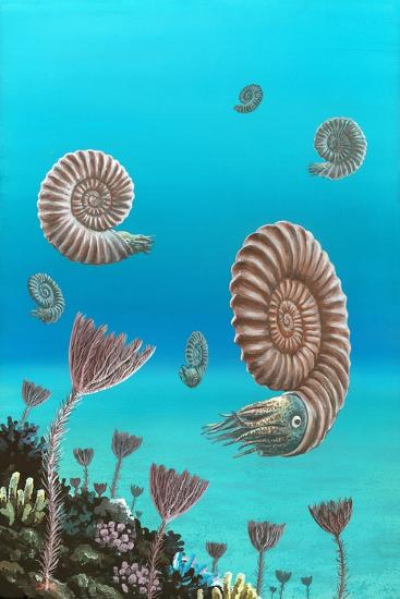 Ammonites In a Jurassic Sea-Richard Bizley-Photographic Print
