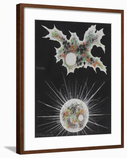 Amoeba-Philip Henry Gosse-Framed Giclee Print