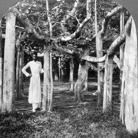 Among the Roots of a Banyan Tree, Calcutta, India, 1900s-Underwood & Underwood-Photographic Print