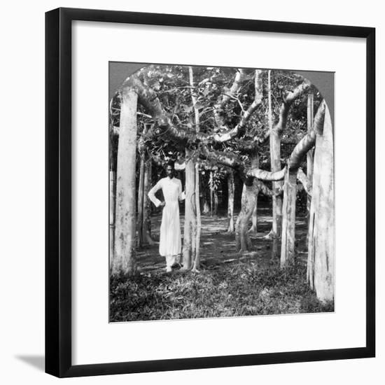 Among the Roots of a Banyan Tree, Calcutta, India, 1900s-Underwood & Underwood-Framed Photographic Print