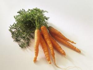 Fresh Carrots with Tops by Amos Schliack