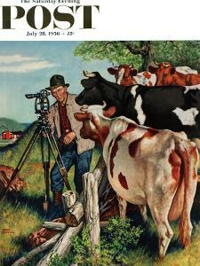 """Surveying the Cow Pasture"" Saturday Evening Post Cover, July 28, 1956 by Amos Sewell"