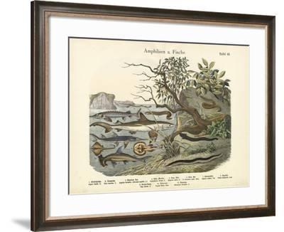 Amphibians and Fishes, C.1860--Framed Giclee Print