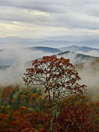 Autumn Colors and Low-Lying Clouds in the Blue Ridge Mountains by Amy & Al White & Petteway