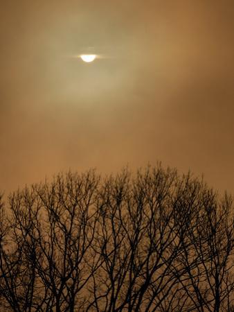 Smoke from a Woodland Fire Obliterates the Sun by Amy & Al White & Petteway