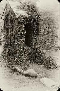 The Old Bell Tower at Warren Wilson College, Covered in Vines by Amy & Al White & Petteway