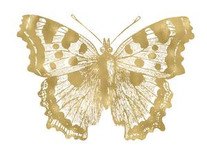 Butterfly 1 Golden White by Amy Brinkman