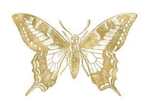 Butterfly 2 Golden White by Amy Brinkman
