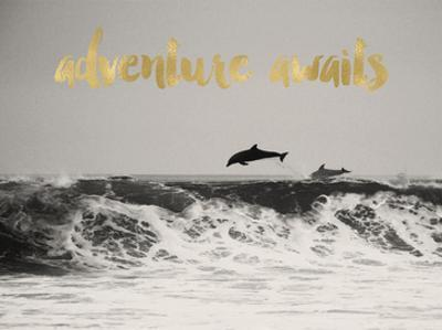 Dolphins Adventure Awaits Golden by Amy Brinkman