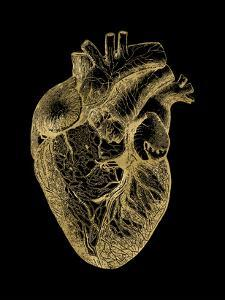 Heart Anatomical Golden Black by Amy Brinkman