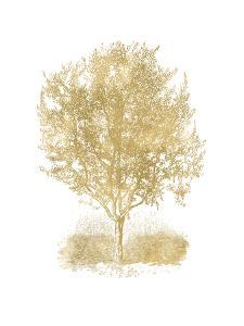 Olive Tree Golden White by Amy Brinkman