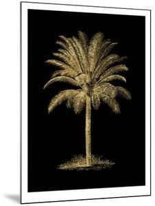 Palm Tree Golden Black by Amy Brinkman