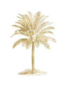 Palm Tree Golden White by Amy Brinkman