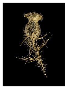 Thistle 1 Golden Black by Amy Brinkman