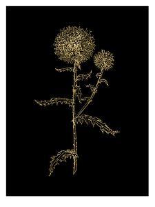 Thistle 2 Golden Black by Amy Brinkman