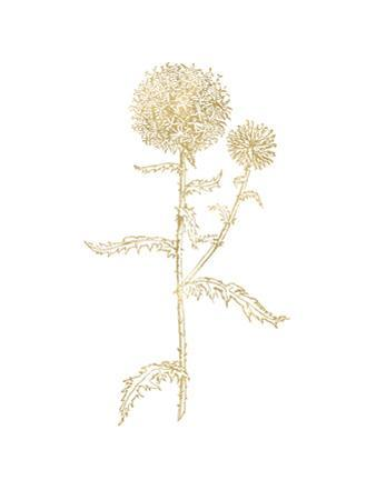 Thistle 2 Golden White by Amy Brinkman