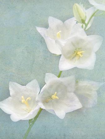 Aqua Floral IV