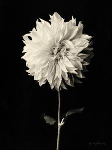Beautiful flowers black and white photography artwork for sale botanical elegance dahlia mightylinksfo