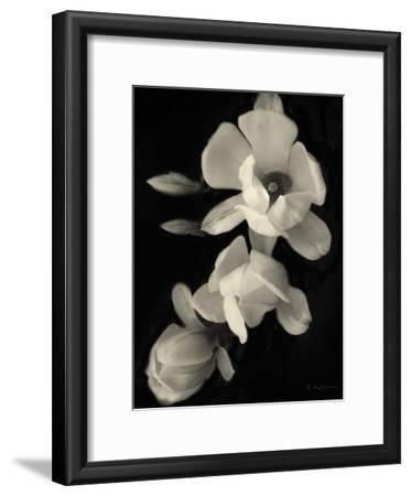 Botanical Elegance Magnolia