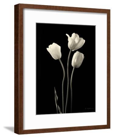 Botanical Elegance Tulips