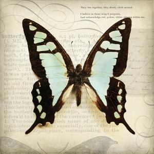 Butterflies Script I by Amy Melious