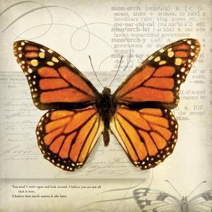 Butterflies Script II by Amy Melious