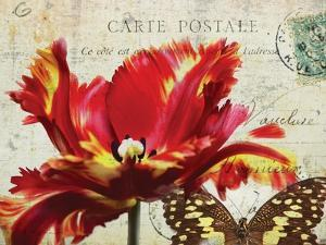 Carte Postale Tulip I by Amy Melious