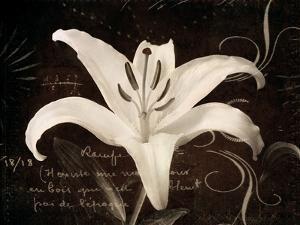 Garden Journal III by Amy Melious