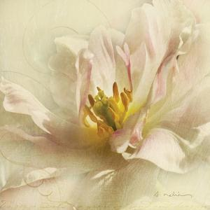 Ivory Romance II by Amy Melious