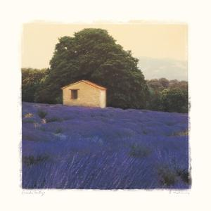 Lavender Country by Amy Melious