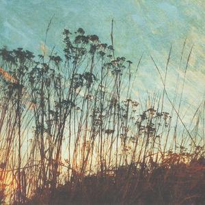 Wild Grass I by Amy Melious