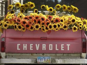 Chevrolet by Amy Sancetta