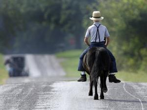 With a Buggy Approaching in the Distance, an Amish Boy Heads Down a Country Road on His Pony by Amy Sancetta