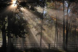 Morning Sunlight Filters Through Trees in Autumn by Amy White and Al Petteway