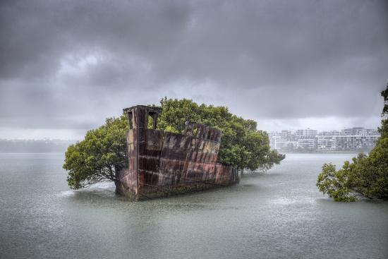 An Abandoned Steamship Sitting in Homebush Bay with Coastal Trees Growing in the Hull-Doug Gimesy-Photographic Print