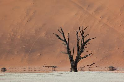 An Acacia Tree and Sand Dune in Namibia's  Namib-Naukluft National Park-Alex Saberi-Photographic Print